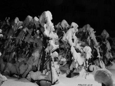 Nuit d'hiver 2015