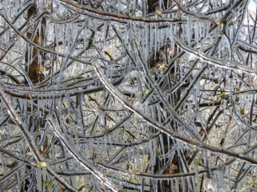 Protection contre le gel des abricotiers en Valais - ( CH )